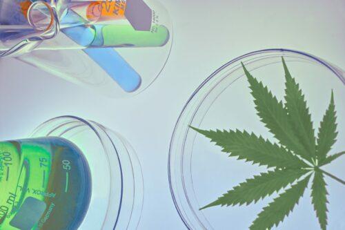 eeuu ley investigación cannabis