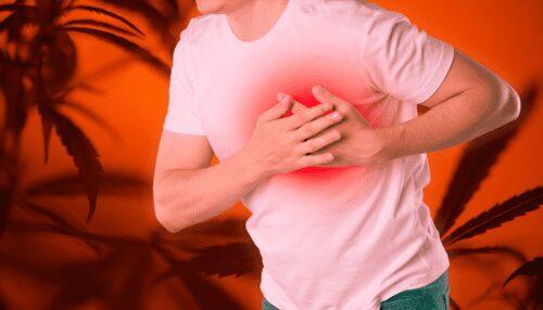 cannabis infarto