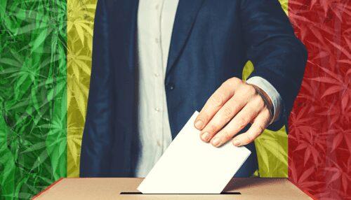 elecciones marihuana candidatos