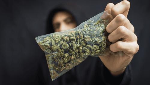 marihuana méxico carteles