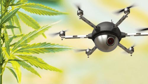 drones marihuana