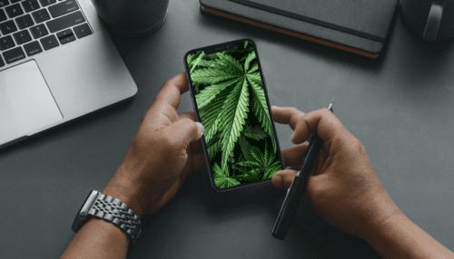 smartphones marihuana