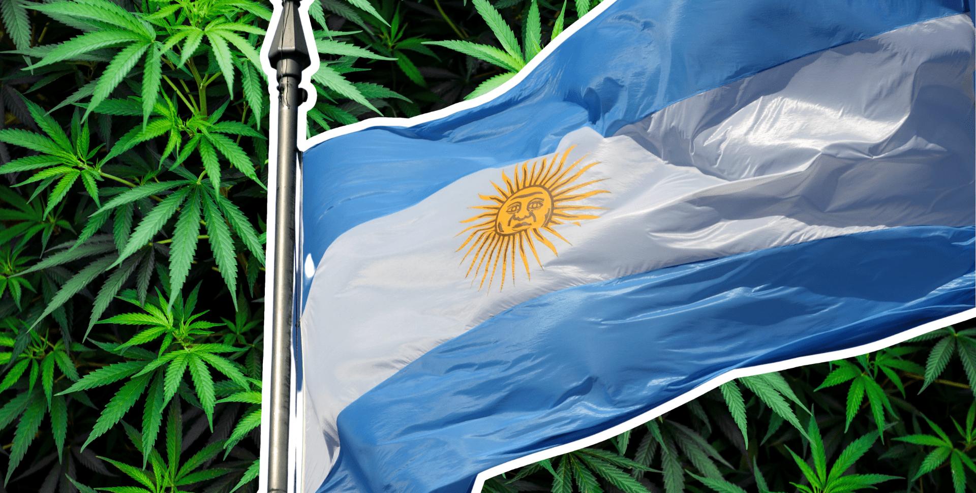 industria cannabis argentina