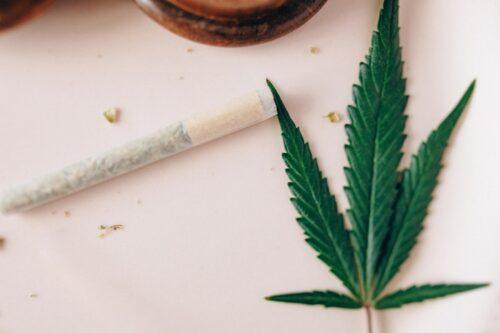 cannabis epilepsia