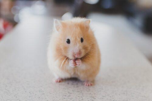 criptomoneda hamster