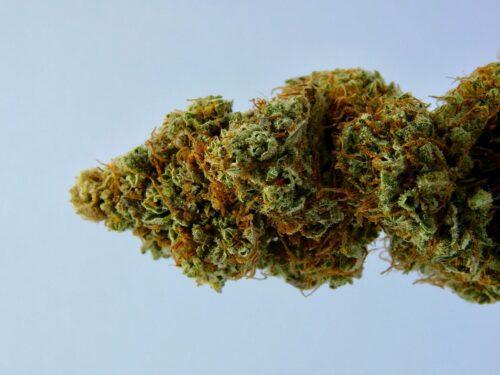 cannabis delta-8 eeuu