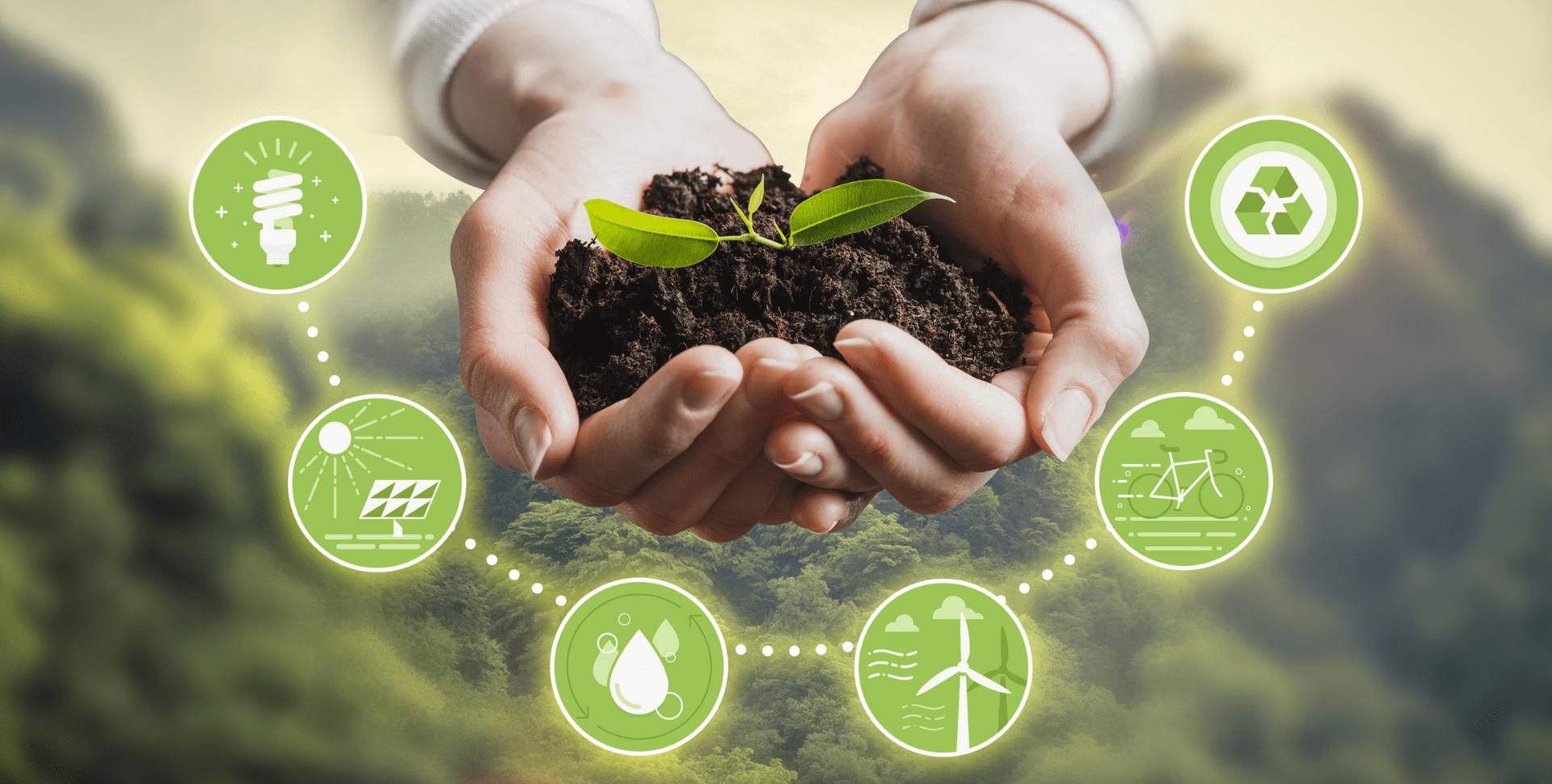 sustentabilidad cannabis