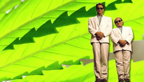 danny devito arnold Schwarzenegger cannabis bromas marihuana