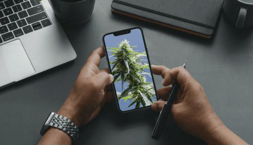 marihuana redes sociales