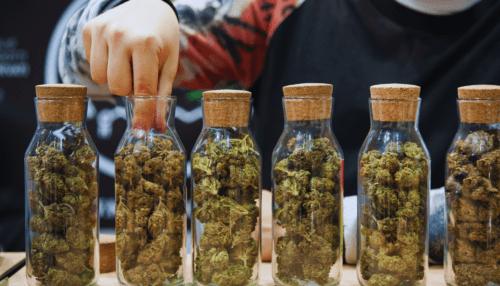 sommelier cannabis ganjier