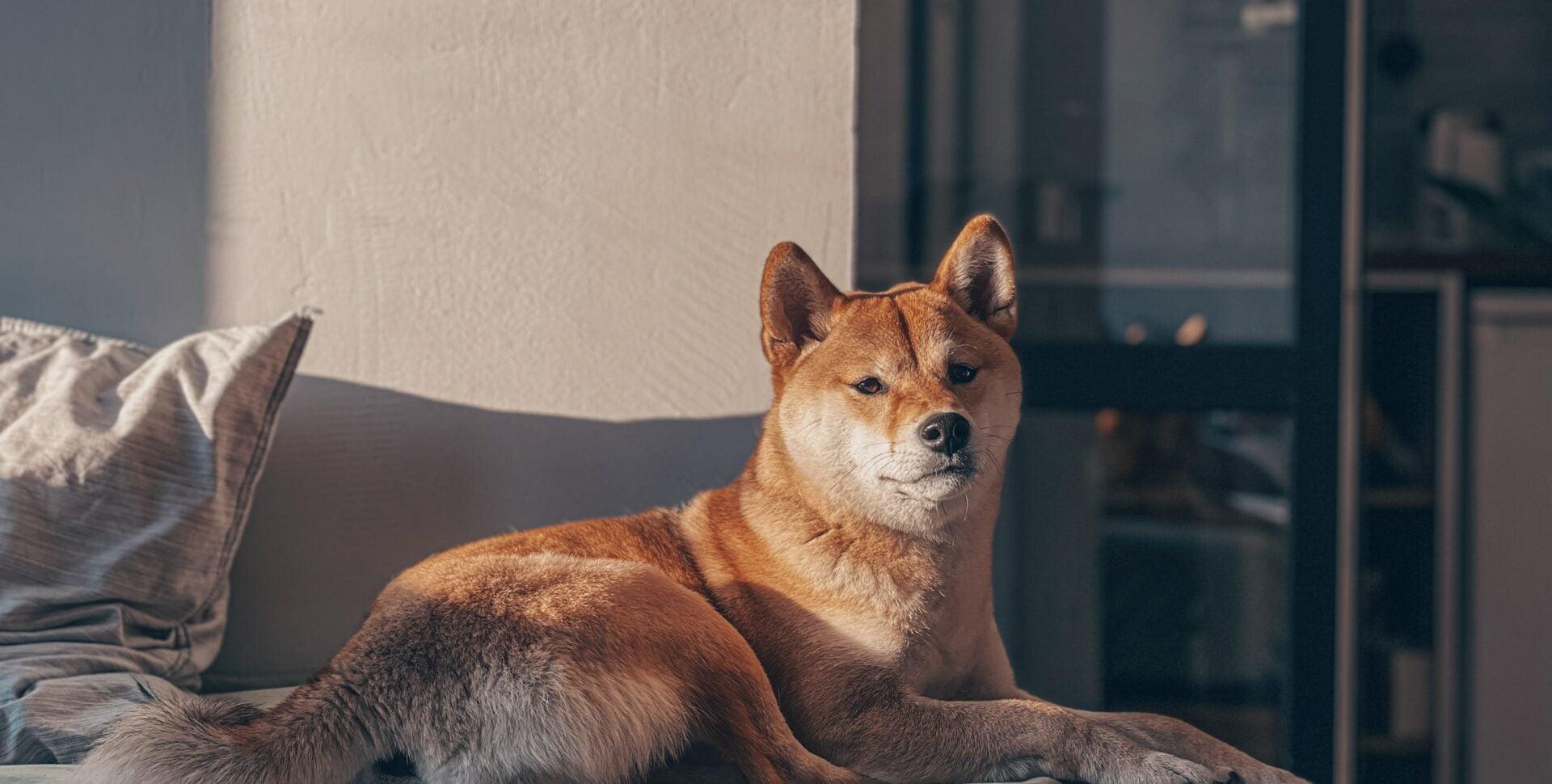 criptomoneda perro elon musk